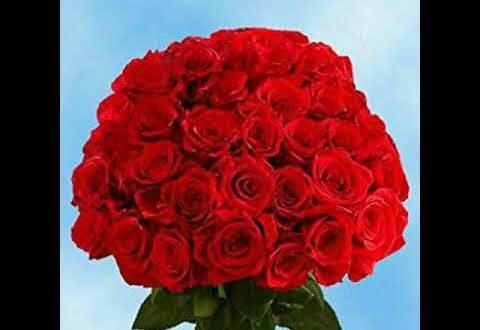 صورة صور ورد جوري متحرك , معاني الورود الجميلة