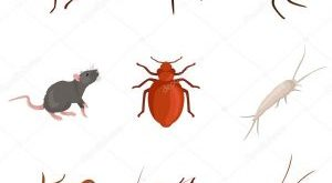 صورة انواع الحشرات المنزلية الضارة بالصور , نوع الحشرة والتخلص منها