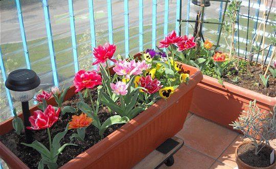 صورة صور حدائق ورد , جمال الحدائق والورود بالصور