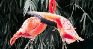 صور صور اجمل حيوانات في العالم , صور لاجمل ما خلق الله من الحيونات في العالم