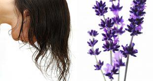 صور فوائد الخزامى للشعر , اللافندر للشعر الحرير
