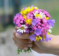 صورة زهور جميلة جدا , اجمل انواع الزهور
