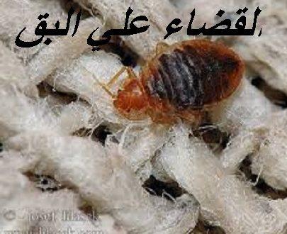 ما هو المبيد الذي يقضي على البق , ازاي اتخلص من حشرة البق ...