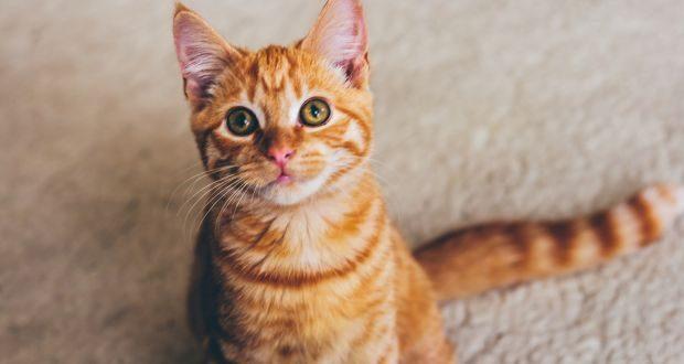 صورة صور لاجمل القطط , اجمل الصور لاجمل قطط بالعالم
