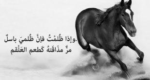 خلفيات خيول مكتوب عليها شعر , صور خيول بها اشعار و حكم