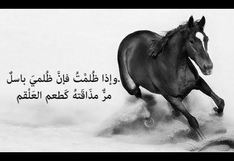 صورة خلفيات خيول مكتوب عليها شعر , صور خيول بها اشعار و حكم
