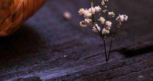 صورة خلفيات للواتس جميله , دلعى الواتس باحلى خلفيه جديدة