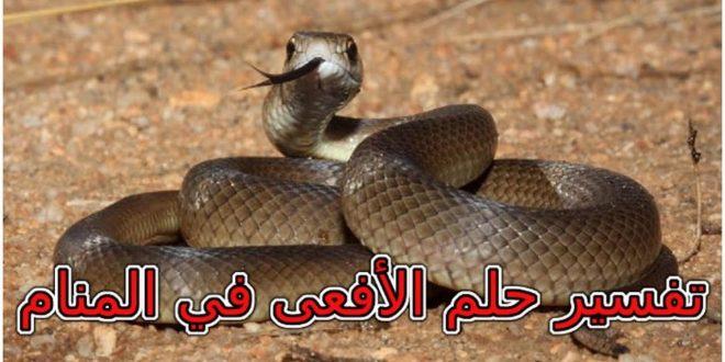 صورة رؤية الافعى في المنام لابن سيرين , معقول ما فسر بها ابن سرين روية الافعى فى المنزل
