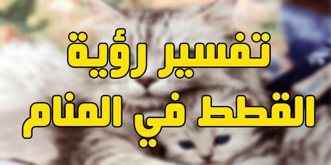 صورة تفسير حلم القط , القط ورؤيته فى المنام وتفسيرة الخطير