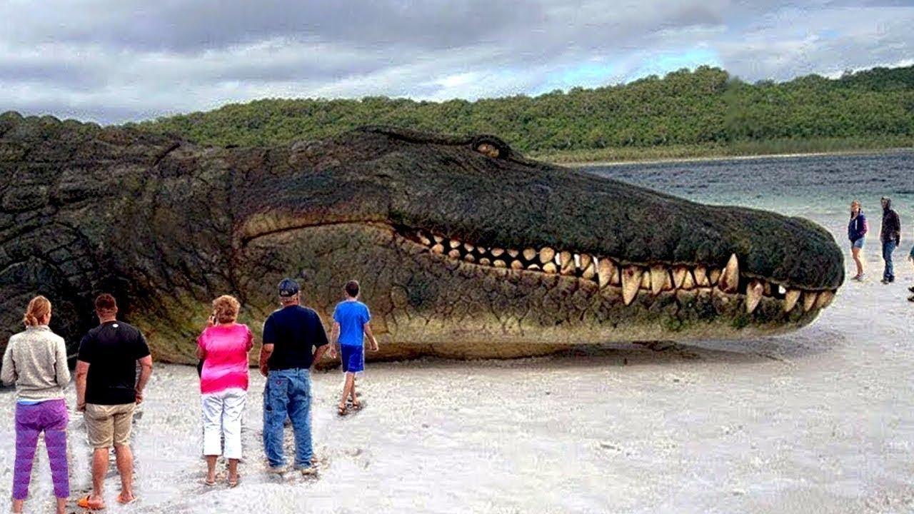 صورة اكبر تمساح في العالم , معقول يوجد تمساح بهذه الضخمه