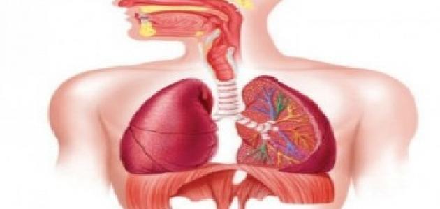 صورة اعراض التهاب القصبات الهوائية , امراض التهابات الصدر