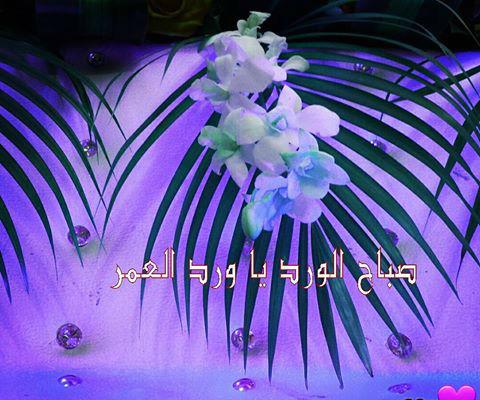 صورة صباح الورد ياورد , عبارات صباحية للاحبة