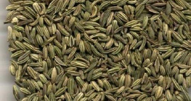 صورة فوائد مغلي الشمر , نبات الشمر يعالج الامراض