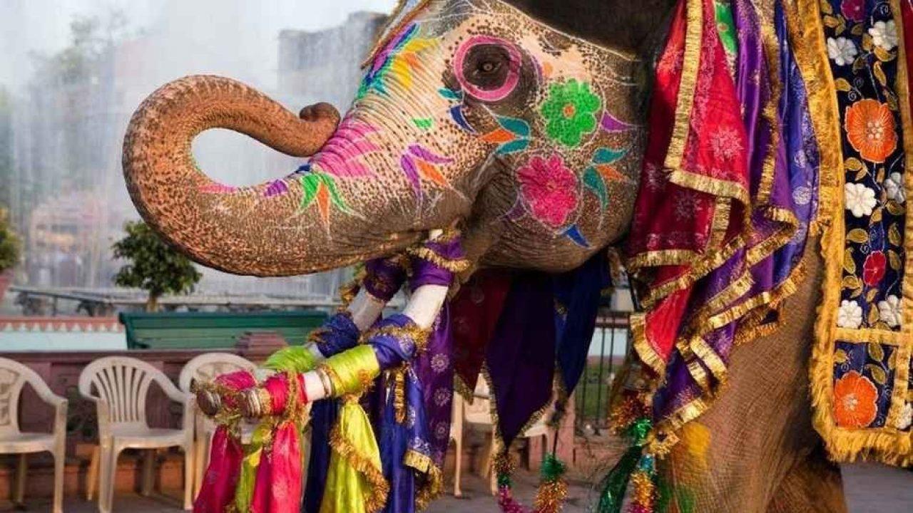 العادات والتقاليد الأكثر غرابة في الهند 6547-29
