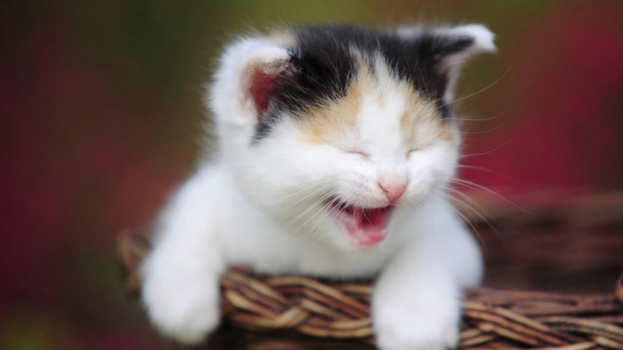 صورة صور قطط مضحكة جدا , اجمل الحيوانات الاليفه على الفيس بوك