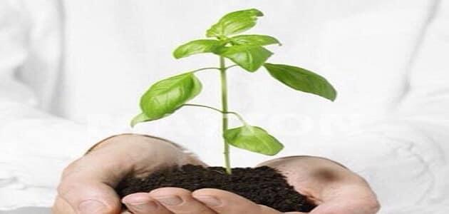 صورة التنفس عند النبات , عمليات التمثيل الغذائي والضوئي