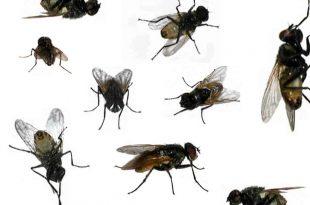 صورة انواع حشرات المنزل الصغيرة , اخطر اربع حشرات تهدد المنزل