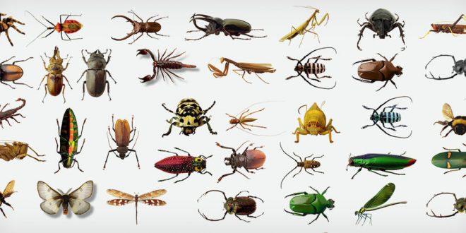 صورة تفسير حلم الحشرات , رؤيه الحشرات في المنام