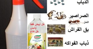 صورة القضاء على الصراصير بالخل , اكتشاف الخل المذهل في القضاء على الصراصير