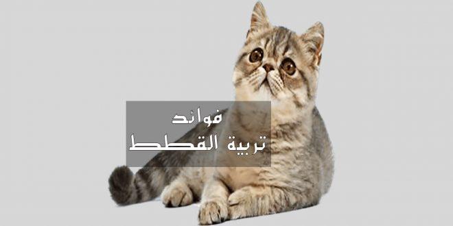 صورة فوائد تربية القطط , فوائد عديده لتربيه القطط