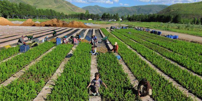 صورة صور عن الزراعة , كيف تتعلم الزراعه وتعرف اهميتها