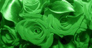 صورة تفسير اللون الاخضر في المنام لابن سيرين , يا ترى للالوان معنى فى المنام