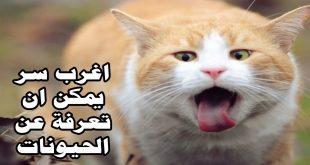 صورة عبارات في حب القطط ,  كلام عن القطط